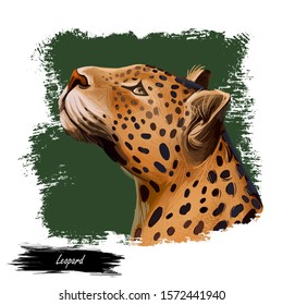 Leopard watercolor portrait of exotic animal. Profile of panther looking aside. Felidae family member, mammal with furry coat with dots. Carnivore panthera pardus wildlife digital art illustration