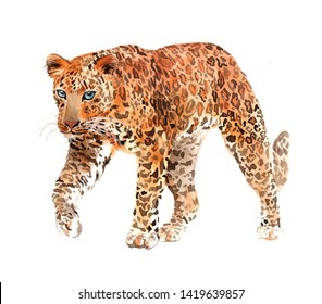 Leopard. Wild big cat. Watercolor realistic illustration isolated on white background.