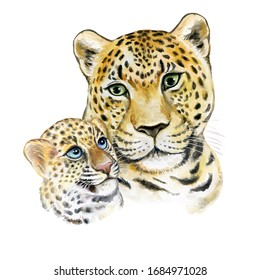 Leopards. Mum with a child isolated on a white background. A tigress mum washes a baby. Watercolor. Illustration, Template. Greeting card design. Bohemian boho drawing for nursery poster, sticker