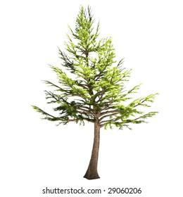 Cedar Tree Bark Images, Stock Photos & Vectors | Shutterstock