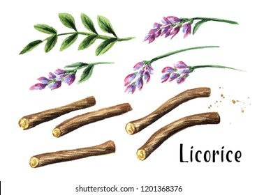 Licorice root and flower set. Watercolor hand drawn illustration isolated on white  background