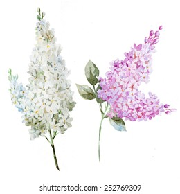 lilac, watercolor, flowers, spring, holiday