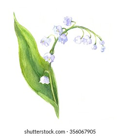 Lily of the valley flower with flowers and leaf. Watercolor