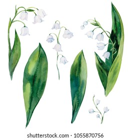 Lily of the Valley. Set. Watercolor illustration