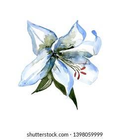 Lily watercolor, hand painted, abstrct