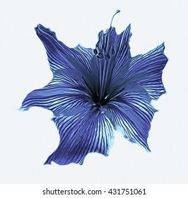 lily. Zephyranthes flower. isolated on white background. illustration, digital art.