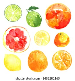 Lime, grapefruit, lemon, mandarin orange. Citrus fruit watercolor drawing on a white background. Drawing of the paints of food.