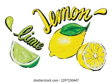 Lime & lemon with calligraphy watercolor illustrator