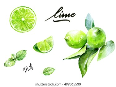 Lime and mint watercolor illustration. Citrus fruit branch lime, lime slice, lime wedge, mint watercolor isolated on white background.