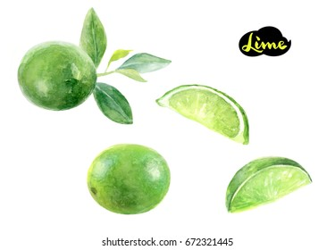 Lime watercolor illustration. Citrus fruit lime with leaves, lime slice, lime whole watercolor hand draw illustration isolated on white background.