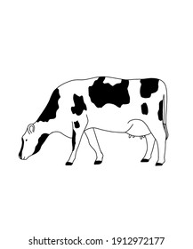 A line art of a cow. Raster illustration.