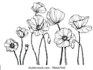 Line art with poppies. Black wall art. Monochrome floral background wallpaper. Flower ornament good for web, print and stencil.