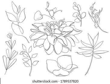 Line art stye set of flowers, leaves, branches. Isolated floral shapes on white background
