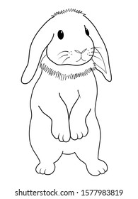 line drawing cute standing fluffy holland lop rabbit on white background