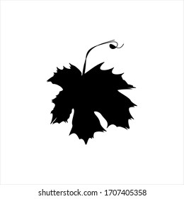 line drawing of isolated object - tree leaf