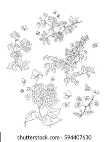 Line drawing of tree blossoms, butterflies, and bees