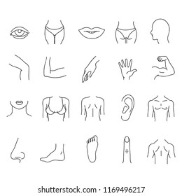 Line human male and female body parts set. Anatomy body part, contour leg and breast illustration