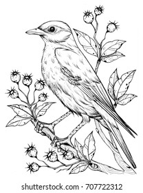 "Linear bird and flower, berries, line drawings, ink drawing, hand drawn floral illustration,  blooming herbs. Design for invitation, wedding or greeting cards.Series of monochrome sketches ""Birds""."
