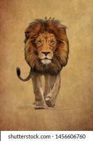 Pencil Sketch Lion Images Stock Photos Amp Vectors