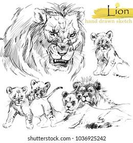 Lion hand drawn sketch. Wild animal illustration.