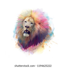 Lion head watercolor painting  on white background