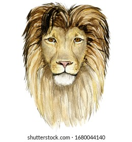 Lion King - big cats. Watercolor animal africa wildlife on isoleted white background. Hand drawn exotic illustration for poster, print t-shirt, greeting card.