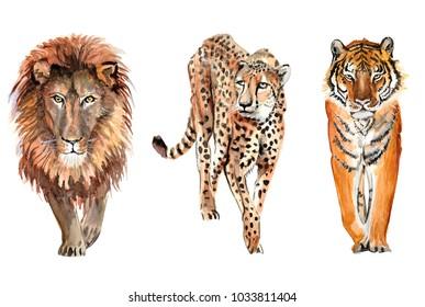 lion, leopard, cheetah, tiger set of watercolor illustrations