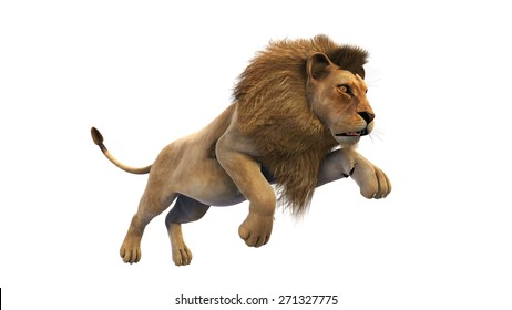 Lion running, wild animal isolated on white background