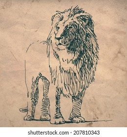 Lion sketch drawing on crumpled texture paper
