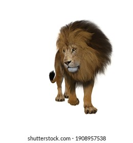 Lion walking forwards and looking down to the side. 3d render isolated on a white background.
