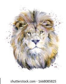 Bild mit Löwenwasserfarben einzeln auf weißem Hintergrund