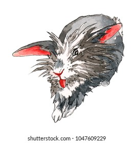 Lion-head bunny with grey fir and red ears stretching and yawning, showing its tongue.