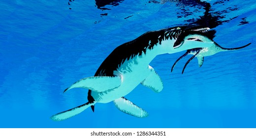 Liopleurodon and Plesiosaurus Reptiles 3D illustration - An unlucky Plesiosaurus becomes the prey for a Liopleurodon marine reptile in England's Jurassic seas.