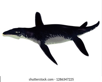Liopleurodon Reptile 3D illustration - Liopleurodon was a large carnivorous marine reptile that lived in the seas off England and France during the Jurassic Period.
