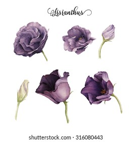 Lisianthus, watercolor, can be used as greeting card, invitation card for wedding, birthday and other holiday and  summer background.