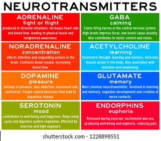 list and properties of neurotransmitters in the human body