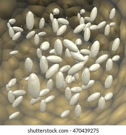 listeria bacterium  3D rendering,