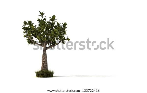 little bonsai isolated on white background