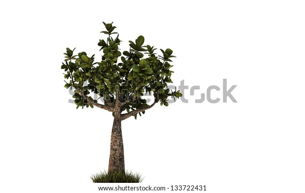little bonsai isolated on white background