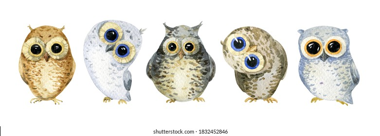 Little cute owls. watercolor illustration isolated on white background