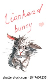 Little fluffy lion-head bunny is sitting with its ears sticking out and a confused facial expression, with hand drawn title above and a pink heart.