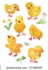 Little funny chickens, watercolor