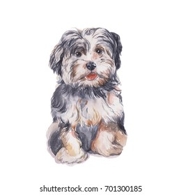 Little lion Dog. Watercolor painting.