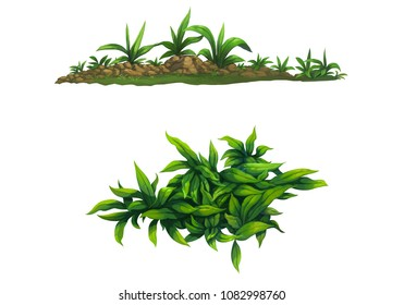 Little shrub for garden and jungle isolated on white background
