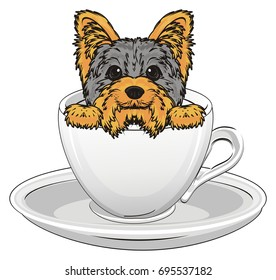 little Yorkshire terrier sit inside of cup