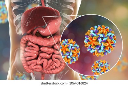 Liver with Hepatitis B infection and close-up view of Hepatitis B Viruses, medical concept, 3D illustration