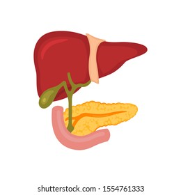 Liver and pancreas on a white isolated background.