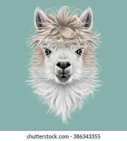 Llama animal portrait. Illustrated portrait of Llama or Alpaca on blue background.