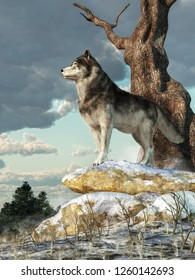 A lone gray wolf stands atop a pile of snow covered boulders.  Seen in profile, this alert hunter looks across a wintry landscape in the North American wilderness. 3D Rendering
