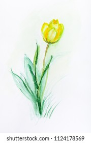 lonely yellow tulip in spring in garden